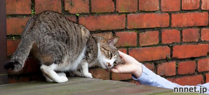 猫好きさん必見!台湾の猫スポット・猫村。台北から日帰りOK!