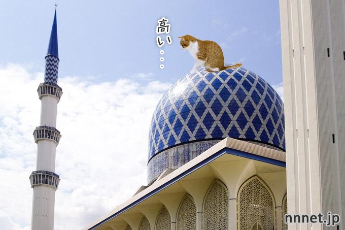 【マレーシア】茶白猫が訪ねてみた。