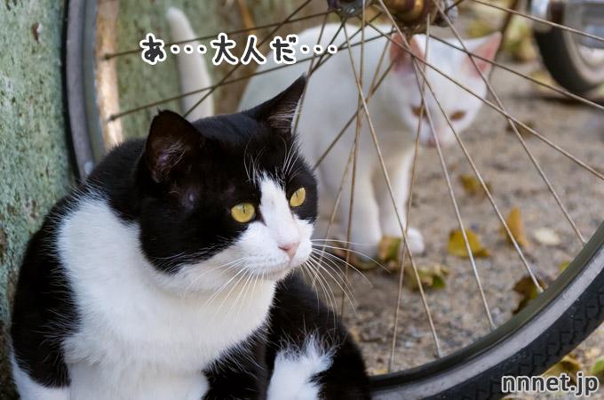現れた大人・・・|相島の猫・白い仔猫たち③