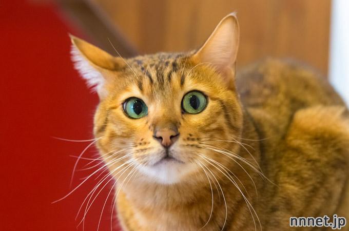 名古屋の猫カフェ・キャッツギャラリー