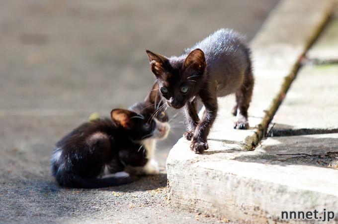 シンガポールの猫・チャイナタウンの仔猫たち