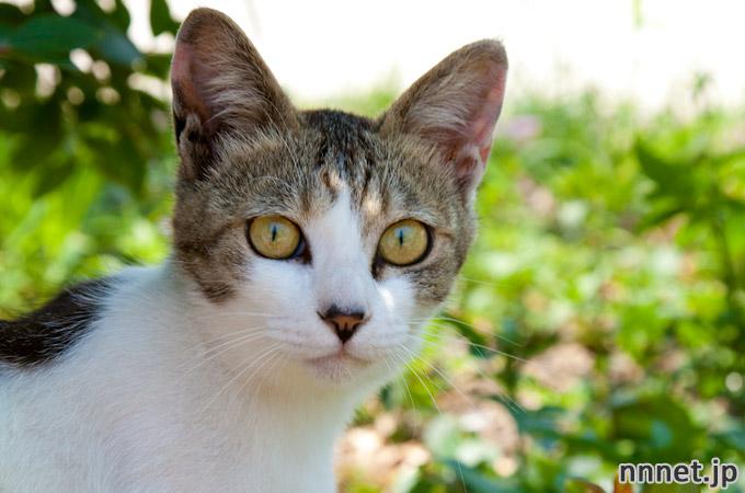 熊本県の離島、湯島の猫