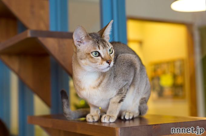 【名古屋の猫カフェ】Cats Gallery(キャッツギャラリー)