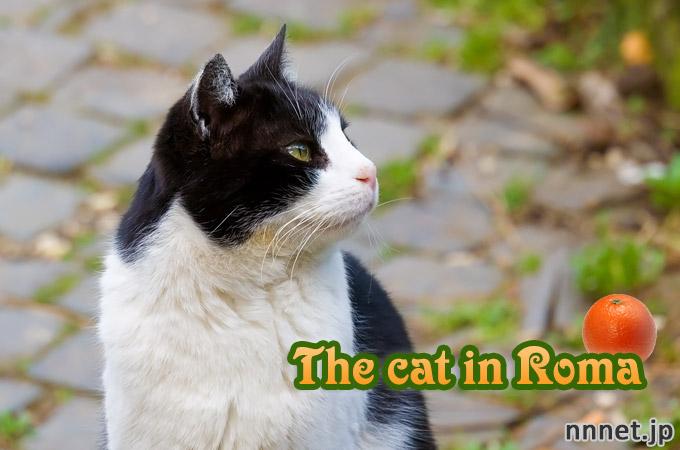 ローマの公園で出会った猫