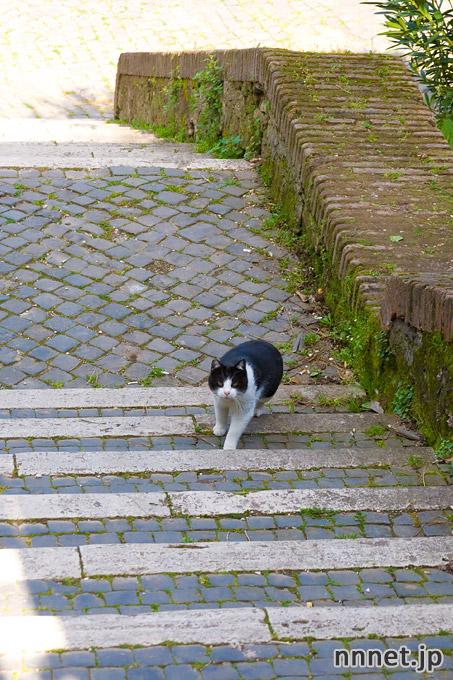 ローマの猫