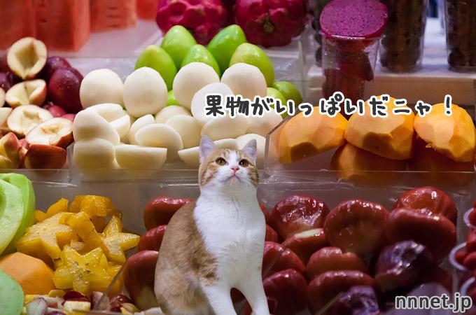 【台湾】猫が美味しい食べ物をご紹介!