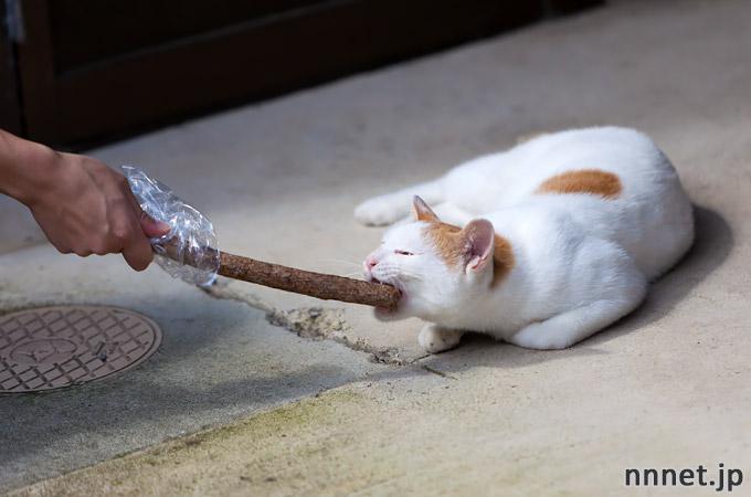 猫にマタタビ