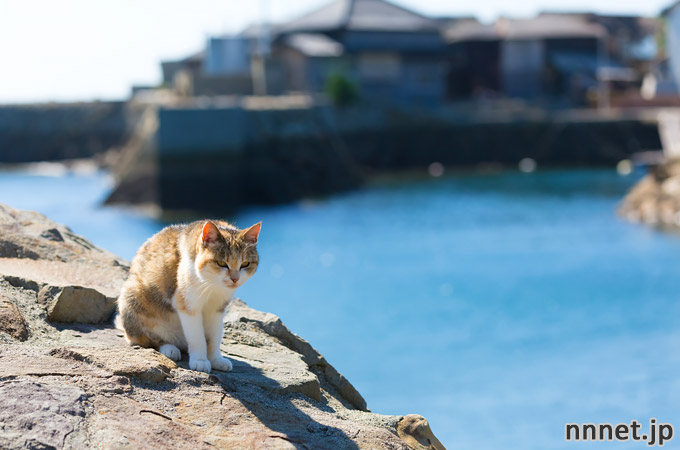 愛媛県・青島の猫たち①