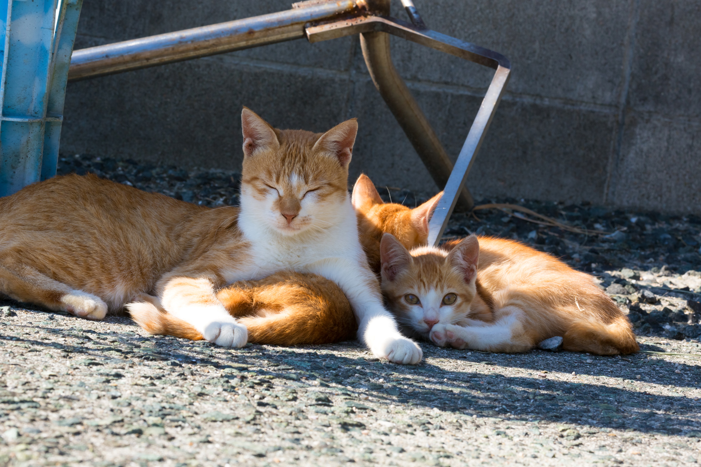 愛媛県・青島の猫たち③のんびり猫たち