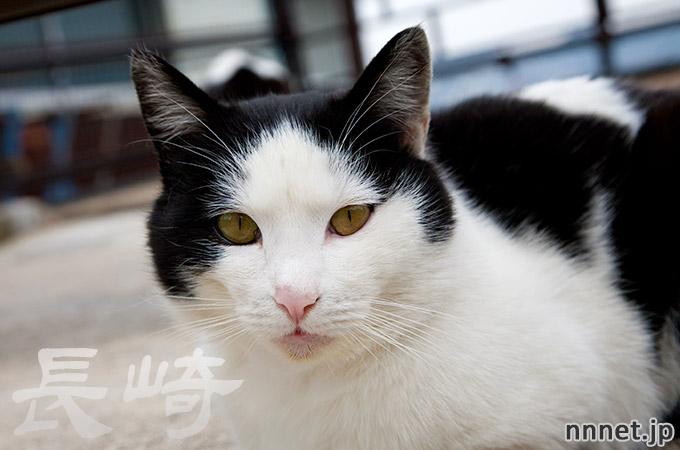 長崎県・尾曲がり猫を探して①