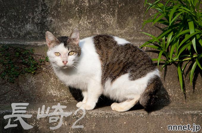 長崎県・尾曲がり猫を探して②
