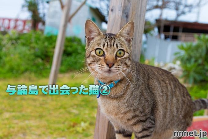 鹿児島県・与論島で出会った猫たち②ビーチのキジトラさんたち