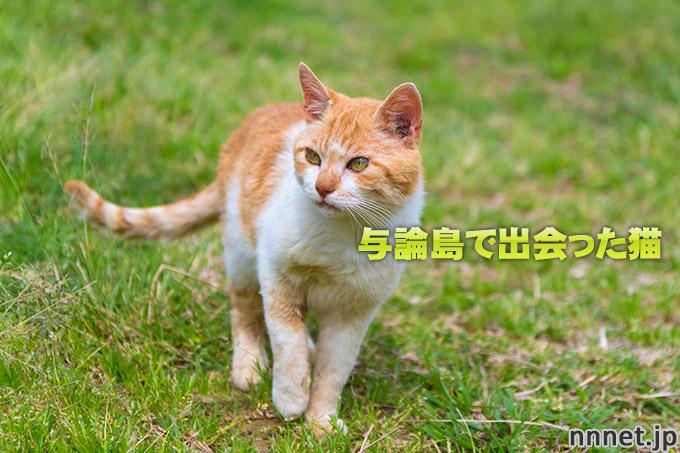 鹿児島県・与論島で出会った猫たち①青空の下の猫と動物