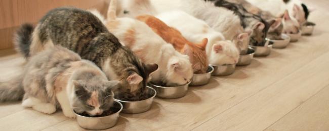 「猫カフェMoCHA」、オリジナルマシュマロ販売開始