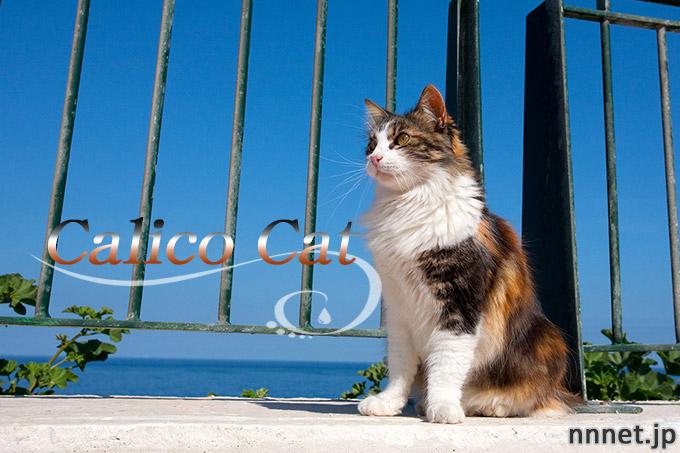 【猫画像たくさん!】三毛猫のことを英語で言うと「Calico cat」