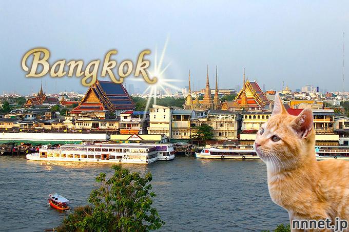 【タイ・バンコク】街を猫が散歩してみた♪