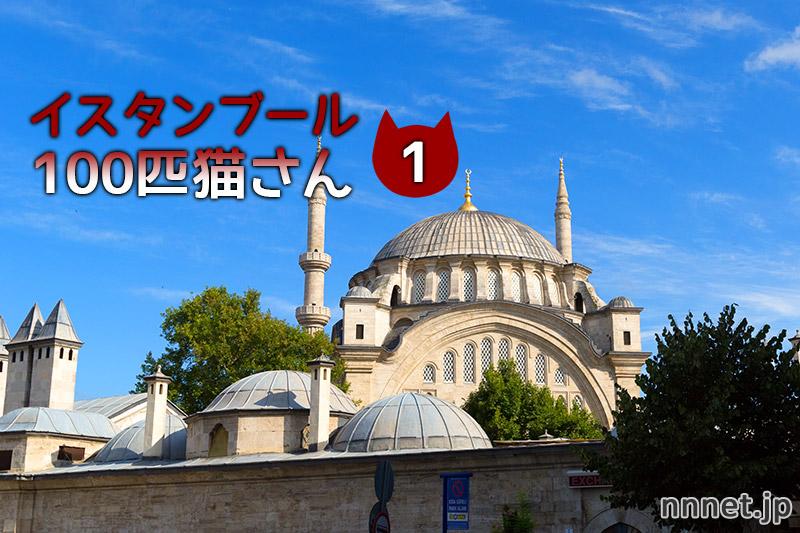 【連載】イスタンブール 100匹の猫さん 1匹目「お腹を出して甘えるキジトラさん」