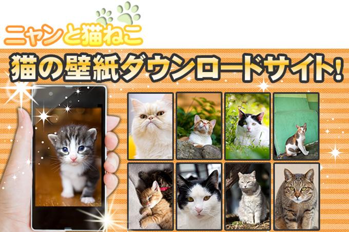 スマホサイト「ニャンと猫ねこ」をご紹介!