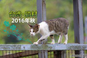台湾・猫村 2016年