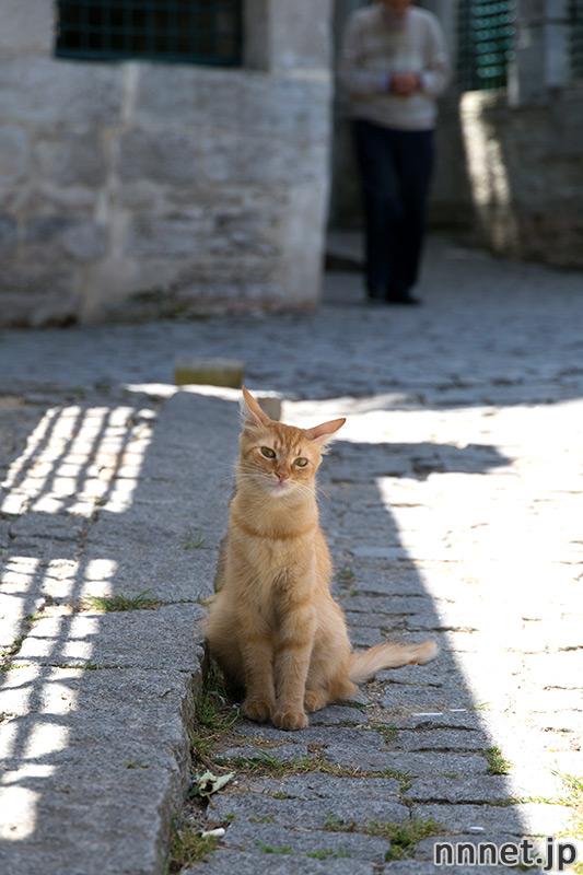 トルコの猫