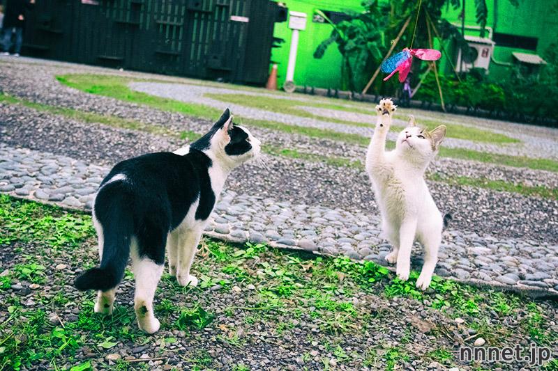 台湾・猫村