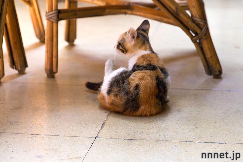 グランドバザール 猫