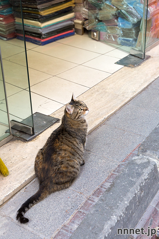 istanbul 100cats