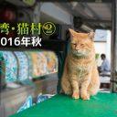 台湾 猫村