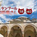 モスクで出会った3匹の猫たち~【連載】イスタンブールの100匹猫さん 38~40匹目