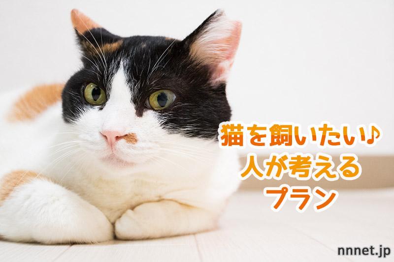 猫を飼いたい人が考えるプラン