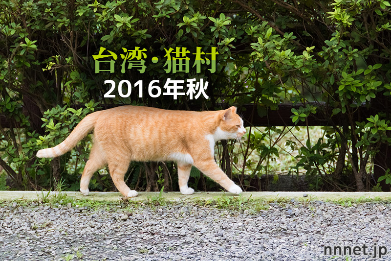 かわいい猫がたくさん!どこか懐かしい「台湾・猫村」画像20枚