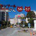 ピザ屋さんの前の2匹【連載】イスタンブールの100匹猫さん 56~57匹目