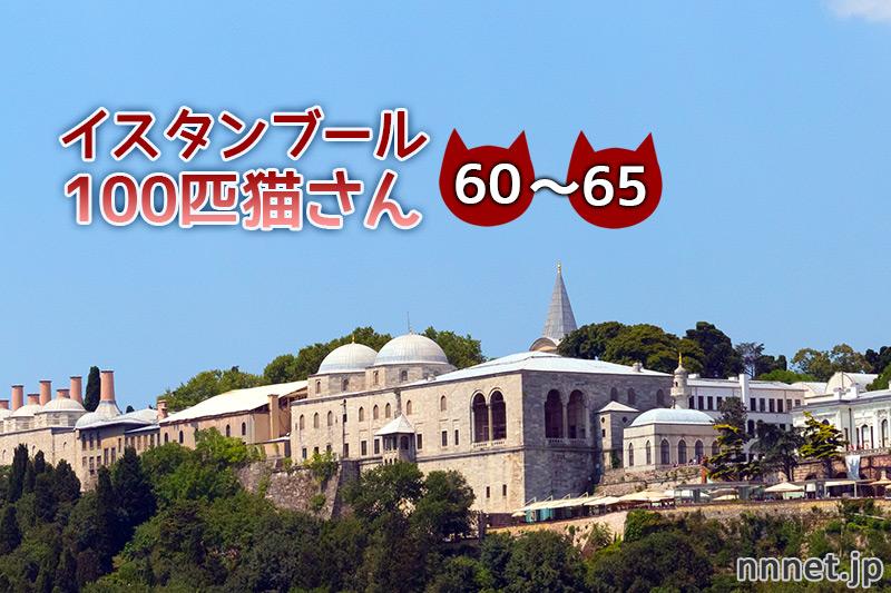 モスクの裏広場で暮らす猫たち【連載】イスタンブールの100匹猫さん 60~65匹目
