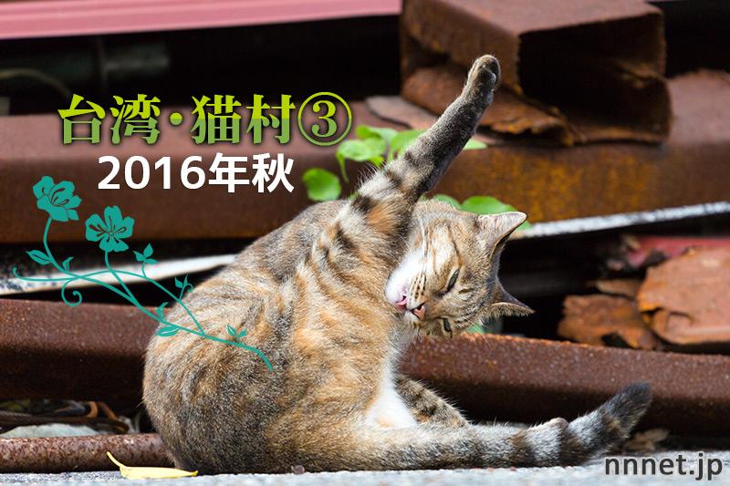 山側の猫たち~【連載】台湾・猫村を旅する③2016年秋~