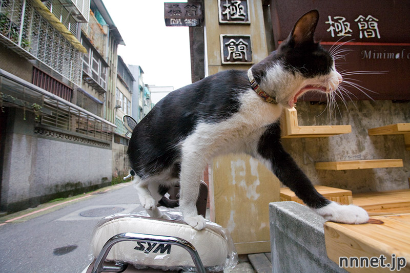 台北の人気猫カフェ「極簡咖啡」をご紹介(画像たくさん)