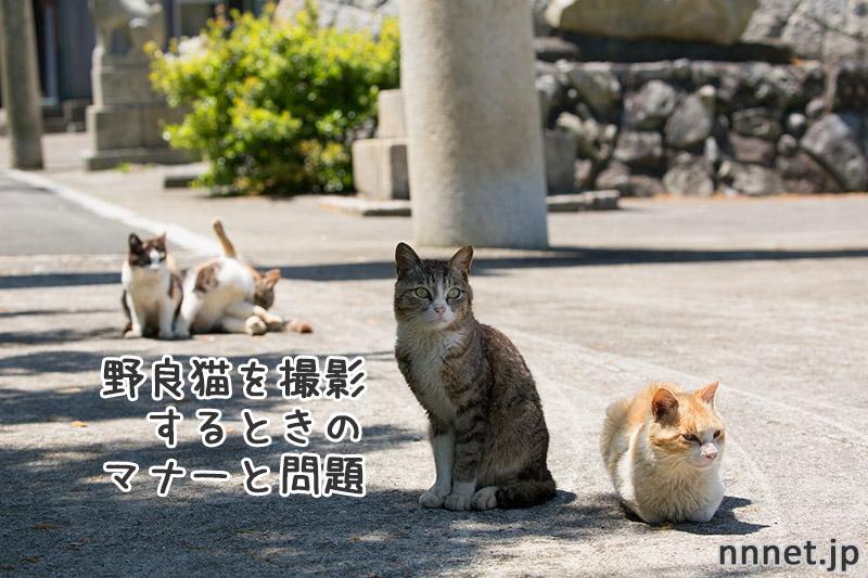 野良猫を撮影するときのマナーと問題
