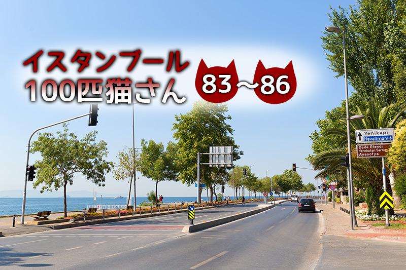 ボスポラス海峡沿いにいた保護色な猫たち【連載】イスタンブールの100匹猫さん 83~86匹目