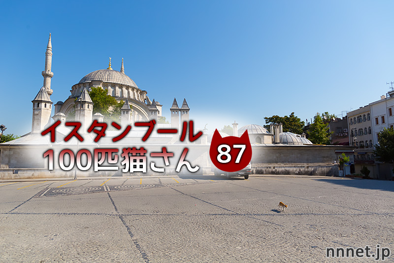 人見知りの白黒猫さん【連載】イスタンブールの100匹猫さん 87匹目