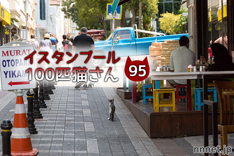 カフェで集まり、固まる猫たち・・・【連載】イスタンブールの100匹猫さん 95匹目
