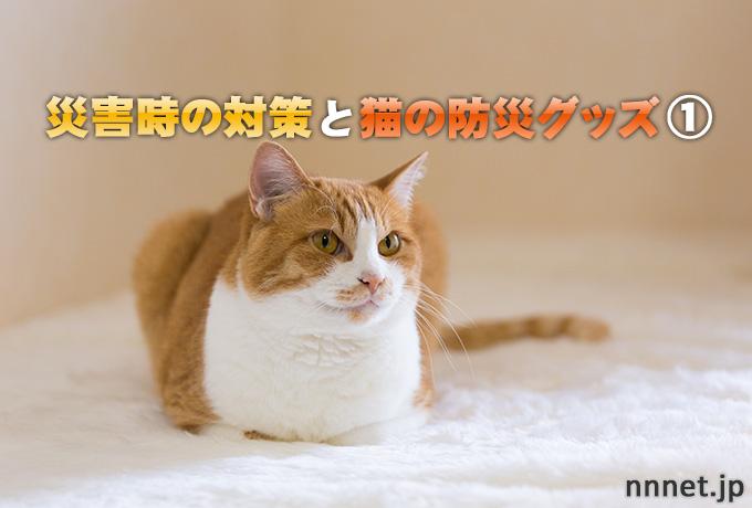 【愛猫を守る】災害時の対策と猫の防災グッズ①
