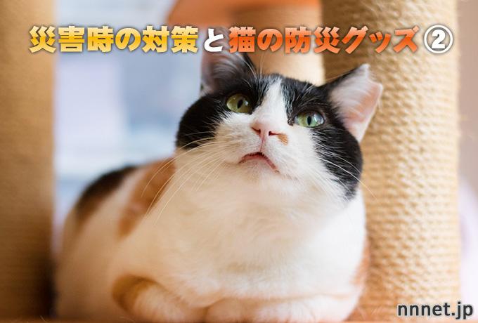 【愛猫を守る】災害時の対策と猫の防災グッズ②