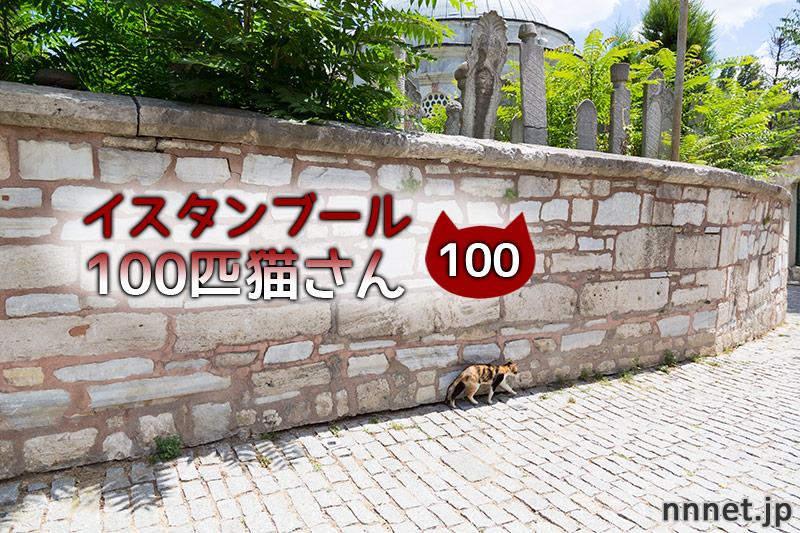モスク近くにいた美しすぎるグレ白さん【連載】イスタンブールの100匹猫さん 100匹目