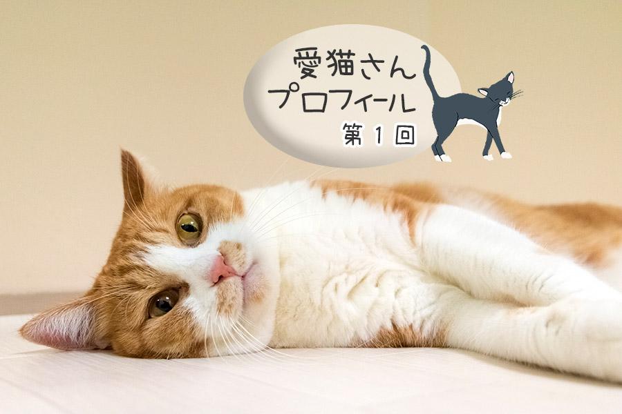 第1回 チャチャ・茶白猫・女の子
