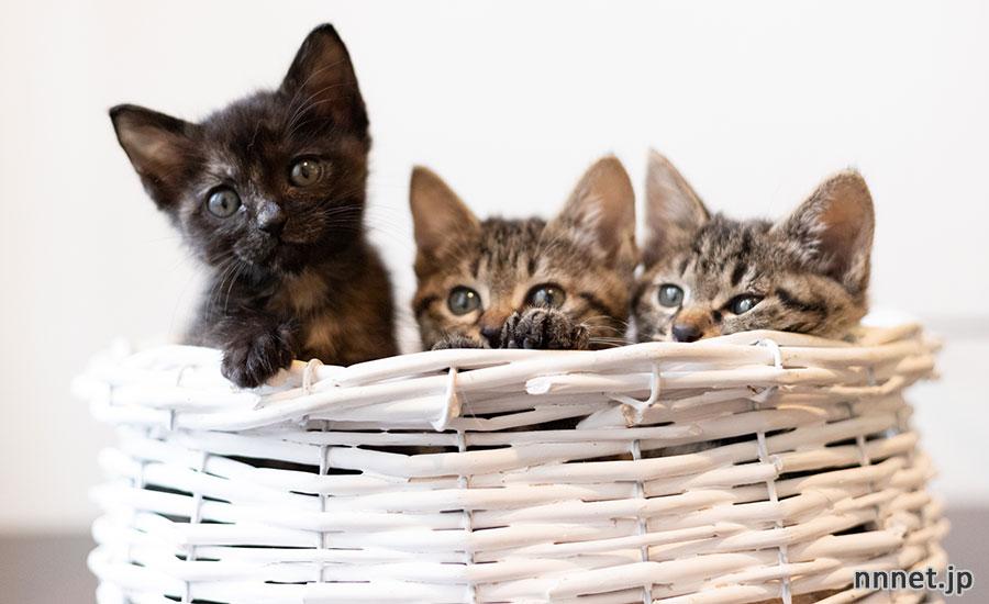 猫の寿命はどのくらい?飼い猫と野良猫の違いは?