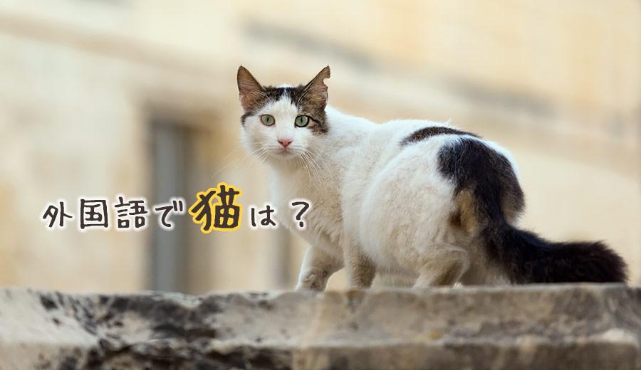 外国の言葉で「猫」って何て言うの?