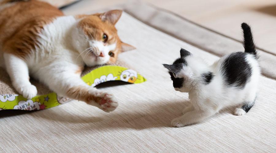 猫をもらう・保護猫の里親になるには