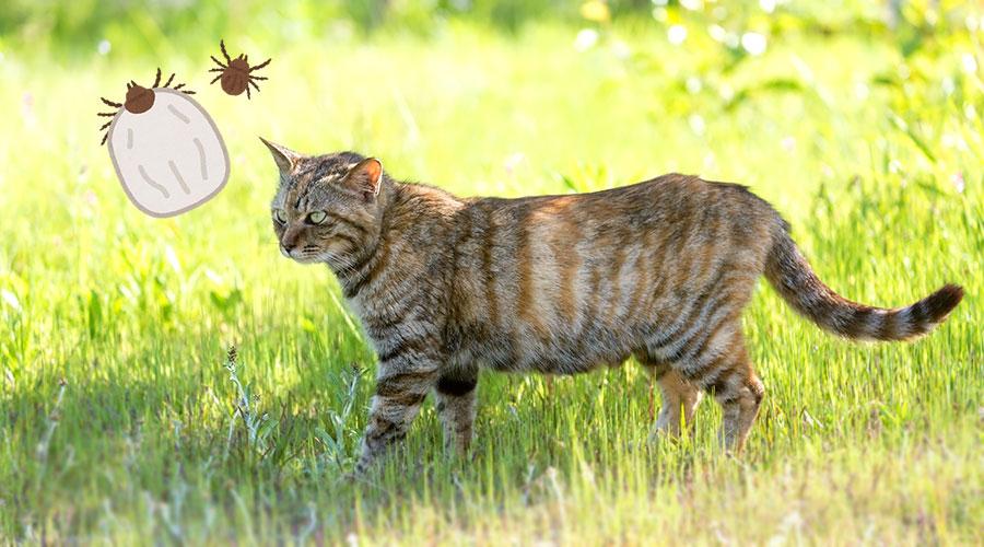 人間も猫も注意!マダニと、SFTSウィルス(重症熱性血小板減少症候群)とは?