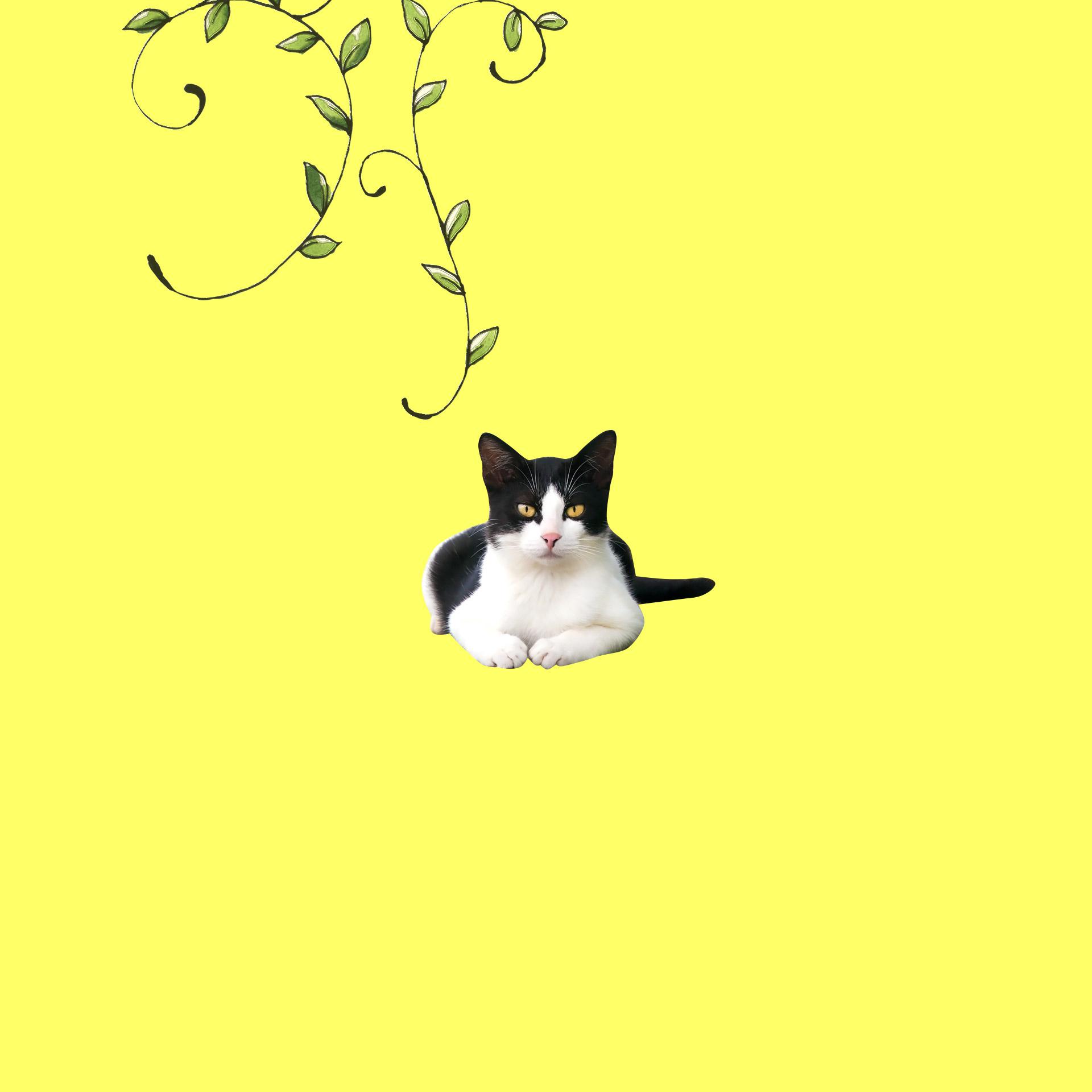 スマホ用 壁紙プレゼント 猫ねこネット 世界ねこ旅や 猫情報