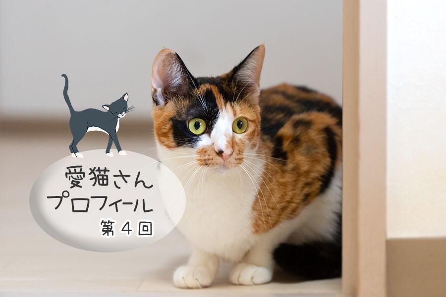 愛猫さんプロフィール