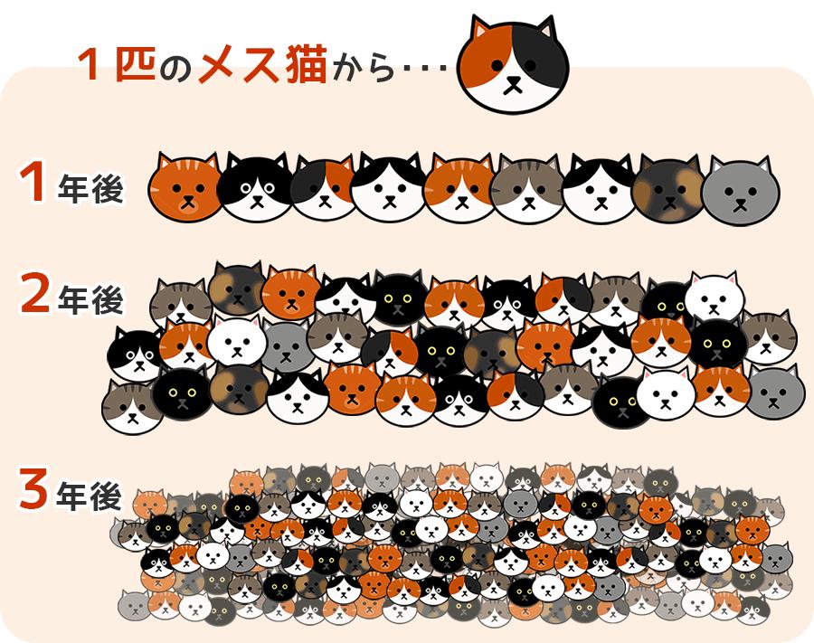 1匹の猫から増える子猫の図